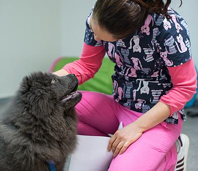 Ветеринарна клиника Нова